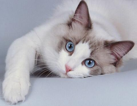 Image result for gatos