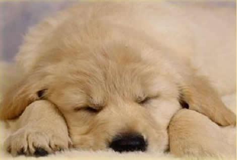 Entrada a la casa y salon recibidor - Página 2 Cachorro_duerme