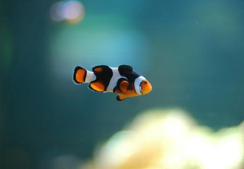 Elegir peces para casa for Peces que no necesitan oxigeno