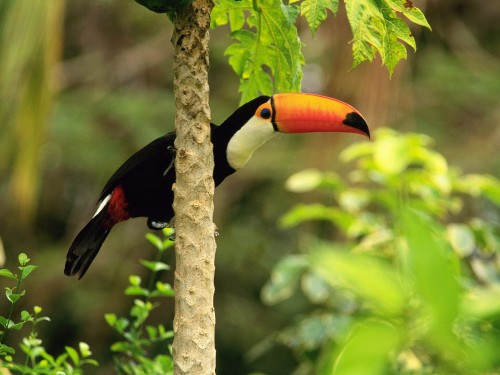 Imagenes de aves exoticas