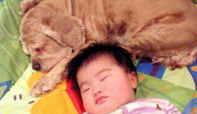 nenes-mascotas-14