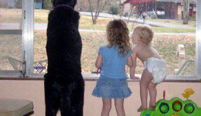 nenes-mascotas-23