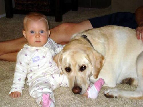 14 de agosto de 2009 | 16:17 pm · Animal Mascota · Perros · fotos