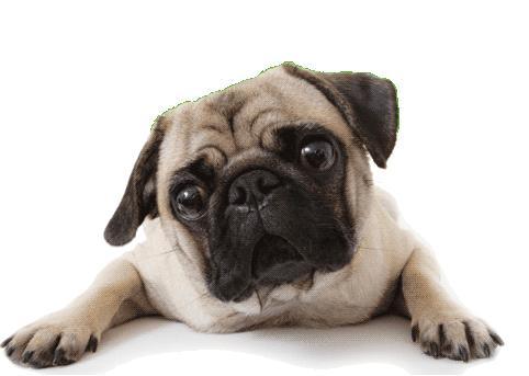 El asma en los perros