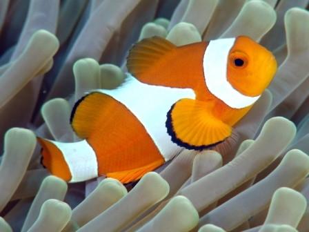 informacion de un pez: