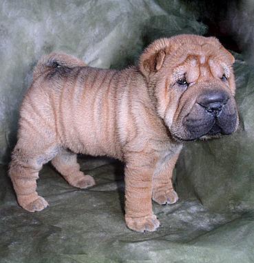 Uno de los perros más bonitos, originales y, también, no hay que