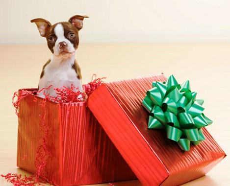 regalo Regalar una mascota