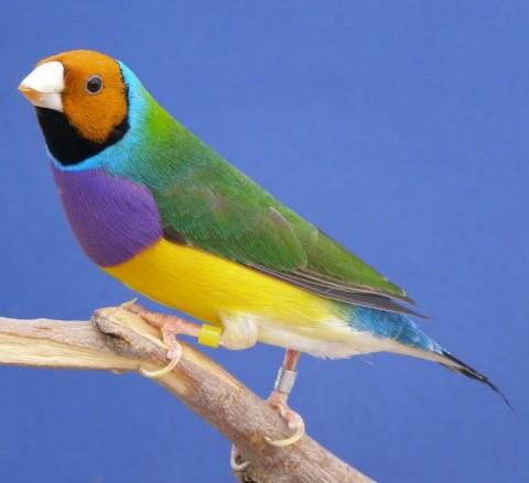 Aves exoticas del mundo