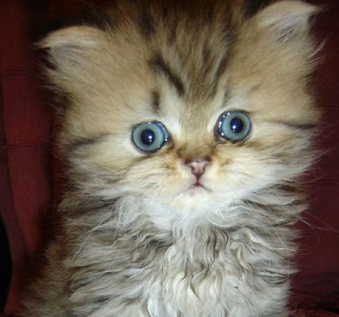 gatos curiosos: