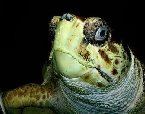 El acuario de nuestras tortugas for Acuario tortugas