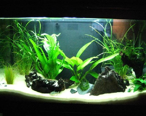 C mo colocar las plantas en un acuario for Acuarios ornamentales