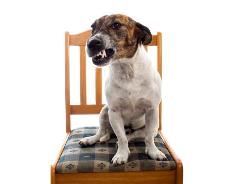 http://animalmascota.com/wp-content/2010/07/gru%C3%B1idos.jpg