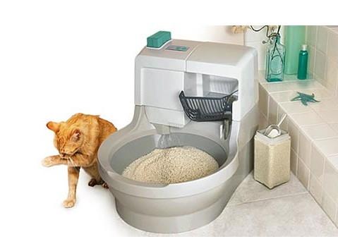 Resultado de imagen para Todo lo que debes de saber acerca de la caja de arena para tu gato