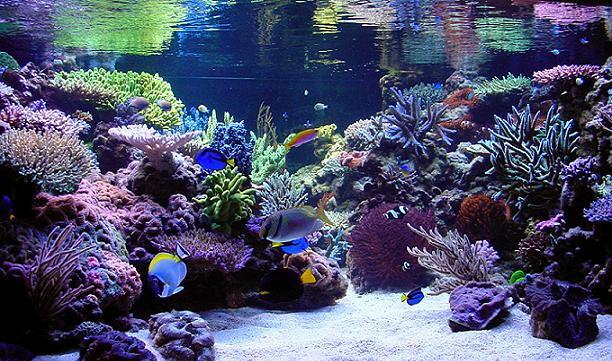 Decorar el fondo del acuario for Oxigeno de peceras