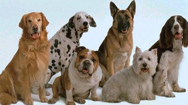 Tener varios perros en casa - Perros para tener en casa ...
