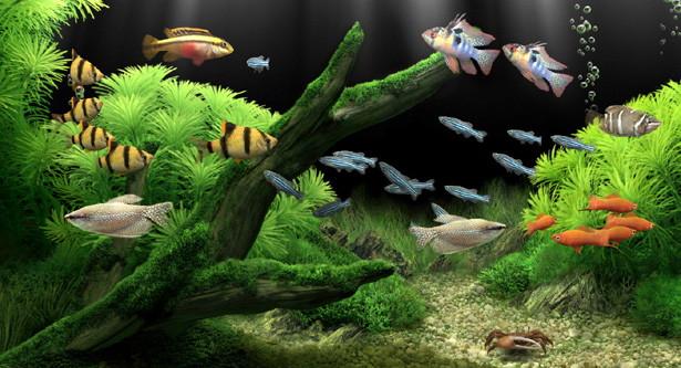 peces llamativos