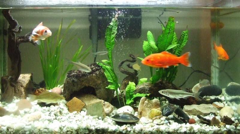 Todo para mi mascota peces consejos para principiantes for Todo para acuarios