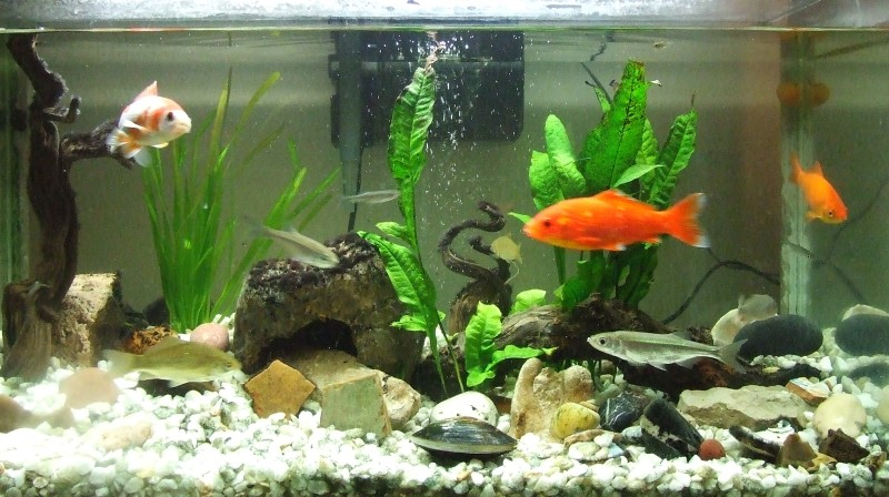 C mo cuidar a tus peces Antialgas para estanques con peces