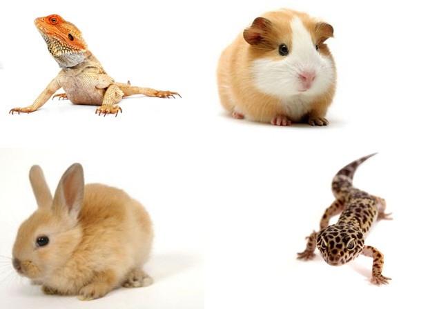 Mascotas diferentes para los peque os de la casa - Casas para perros pequenos ...
