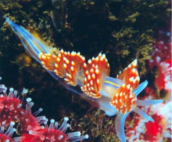 los peces mas raros del mundo