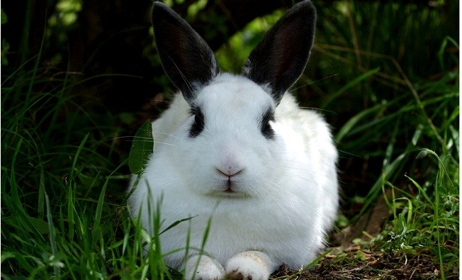 caras de conejos prostitutas baratas en lerida