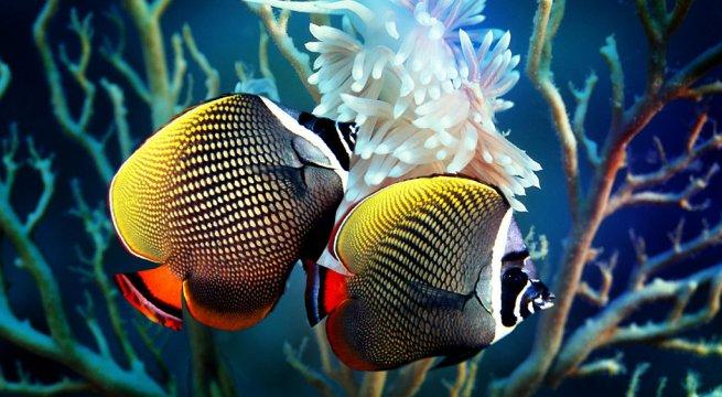 Cu ntos peces caben en nuestro acuario for Peces artificiales para acuarios