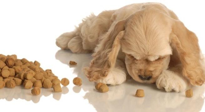 Elegir el pienso adecuado para nuestro perro for Mejor pienso para perros