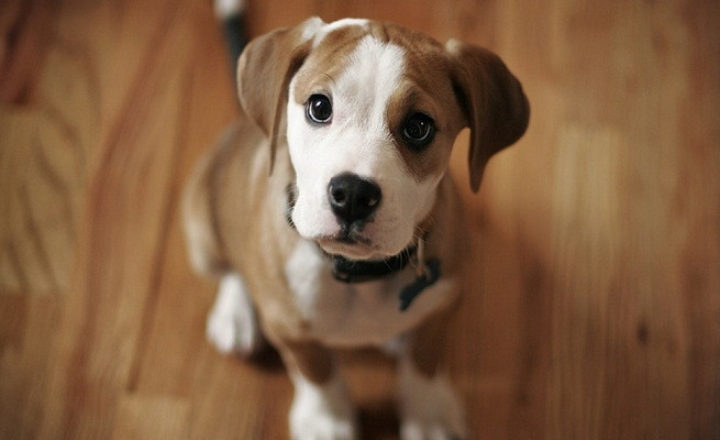 Alergias en la piel de los perros