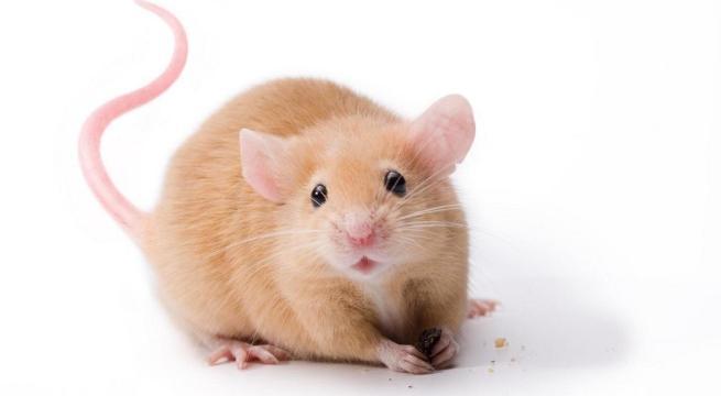 Tener Un Raton Como Mascota on Imagenes Peces Colorear