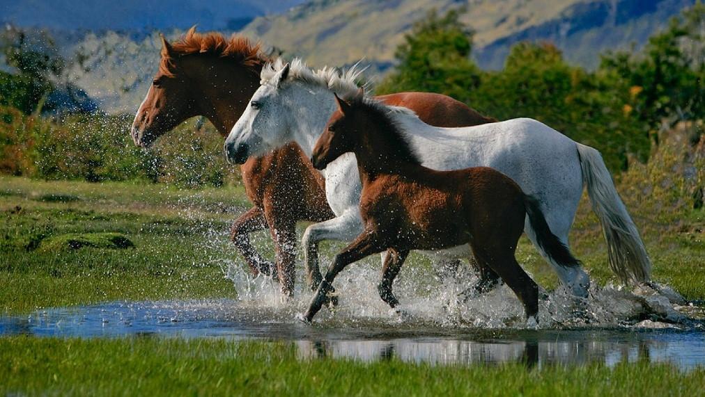 www animales en peligro de extincion:
