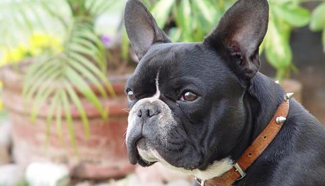 Mejores razas de perros para vivir en un piso for Que altura de piso es mejor para vivir