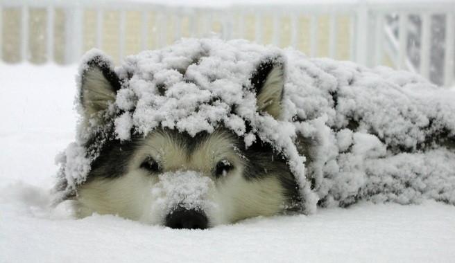 .. Y LLEGA EL INVIERNO... Consejos-para-cuidar-de-tu-perro-en-invierno