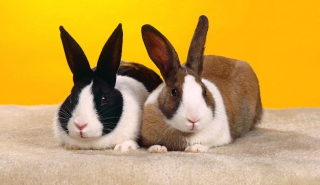 prostitutas y enfermedades caras de conejos