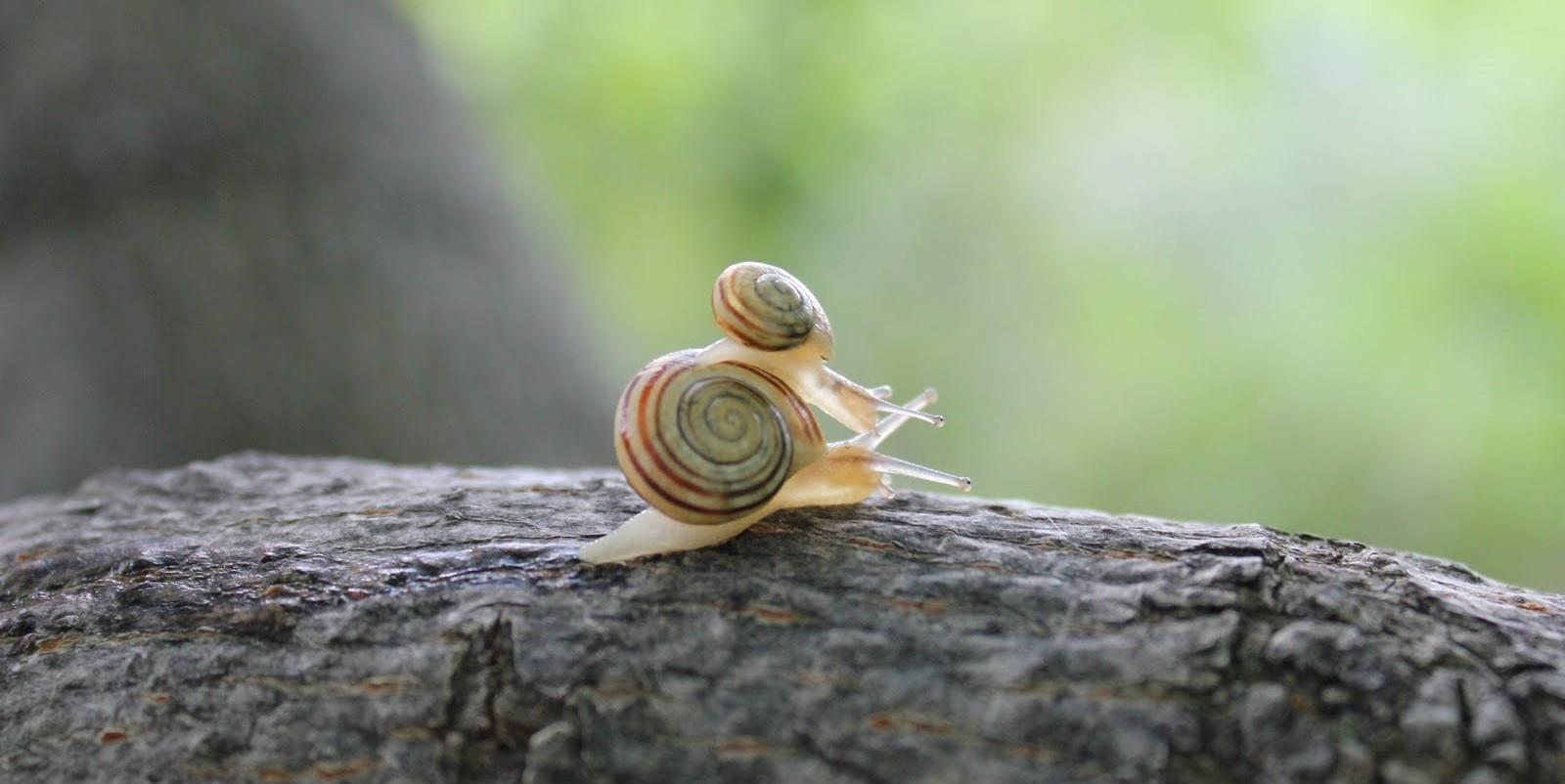 criar caracoles en casa