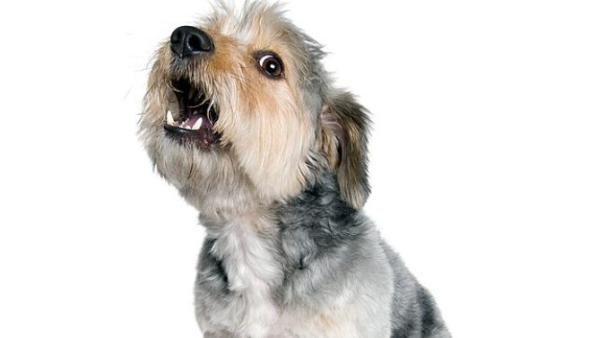 How To Control Dog Barking