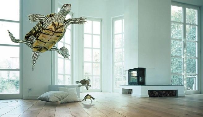 Criar tortugas en casa for Como criar peces en casa para consumo