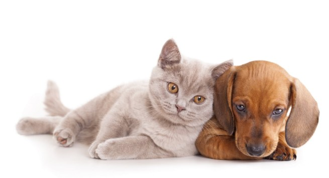 Perros y gatos en la misma casa for Red transparente para gatos
