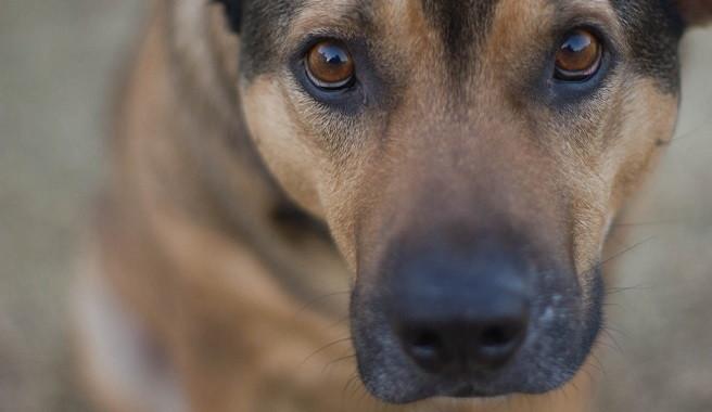 C mo eliminar las garrapatas del perro paso a paso for Como combatir las garrapatas en el jardin