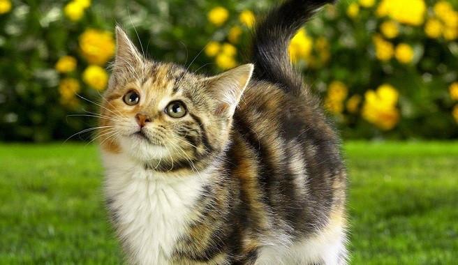 Consejos para ahuyentar a los gatos for Ahuyentar gatos de mi jardin