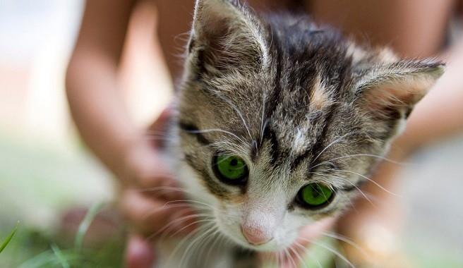Orina archives animal mascota - Quitar olor a pis de gato ...