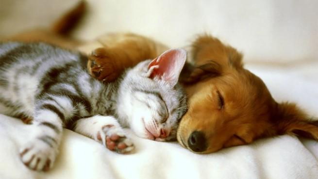 Cómo curar quemaduras en perros y gatos