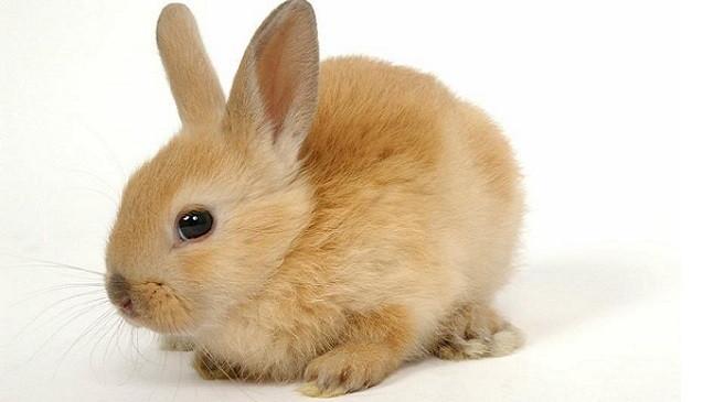 Consejos para escoger un conejo