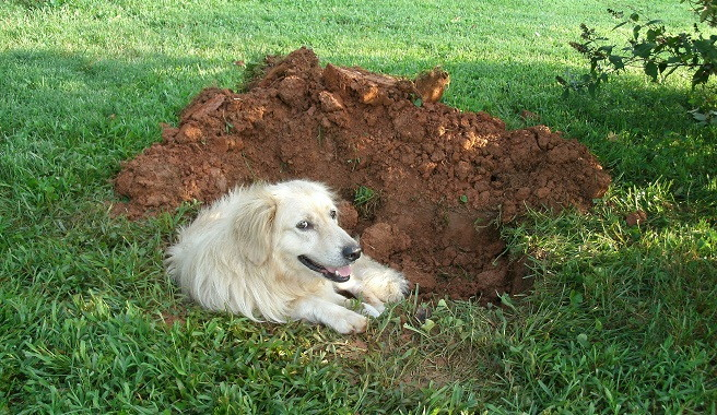 how to stop dog from digging holes in yard