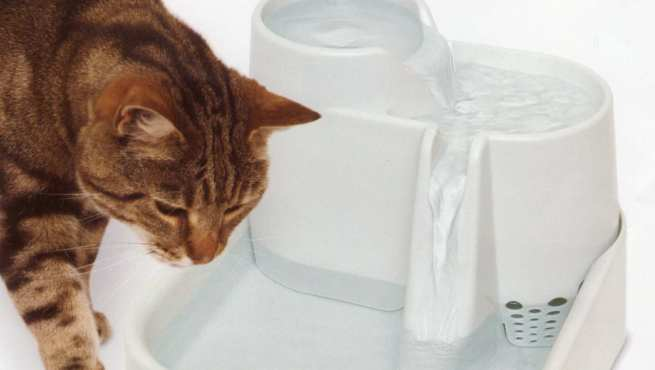 Fuentes Agua Para Gatos Fuentes Para Gatos