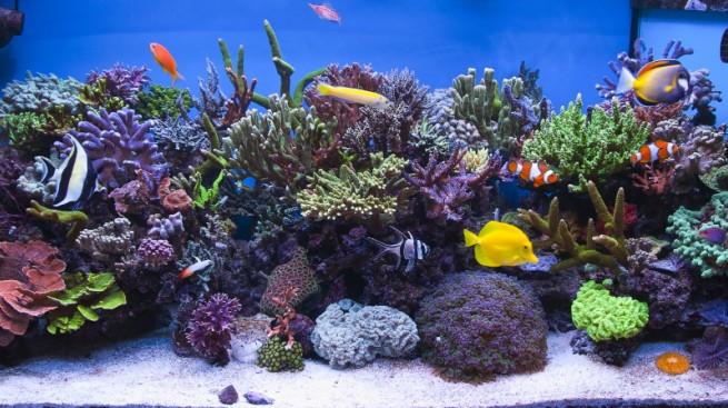 Decorar el acuario con roca viva for Como hacer una laguna artificial para peces