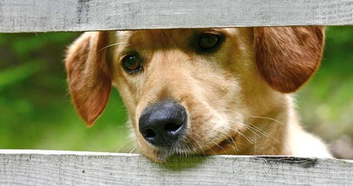 C mo hacer una casa para perros for Construir piscina para perros
