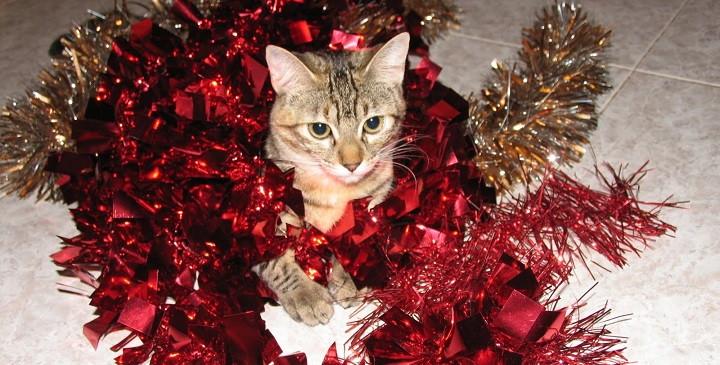 El peligro de los adornos navide os para las mascotas for Cuales son los adornos navidenos