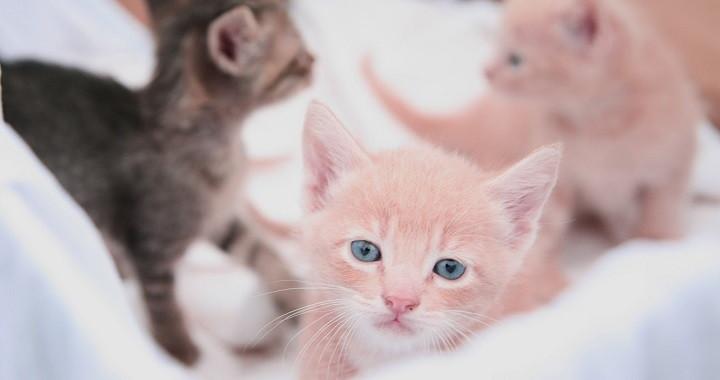 Que hacer mi tu gata esta embara