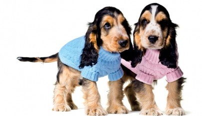 benetton_dog_collection_02