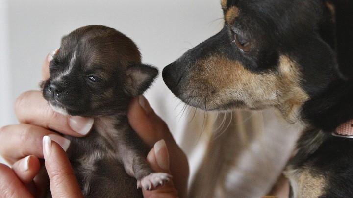Qué hacer durante el parto de nuestra perra